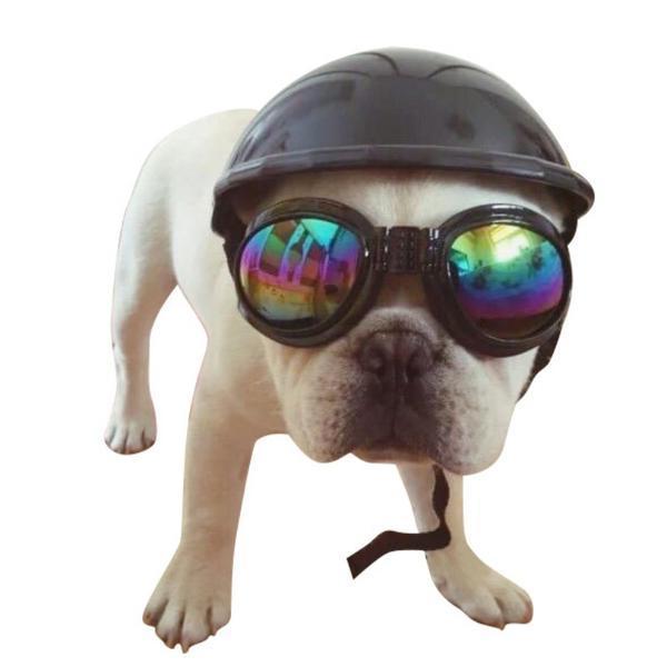 Casque moto chien